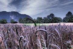 Am Weißbach (4)